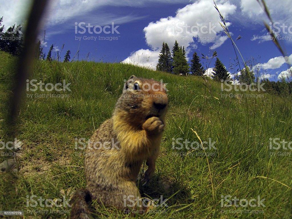 Cute critter stock photo