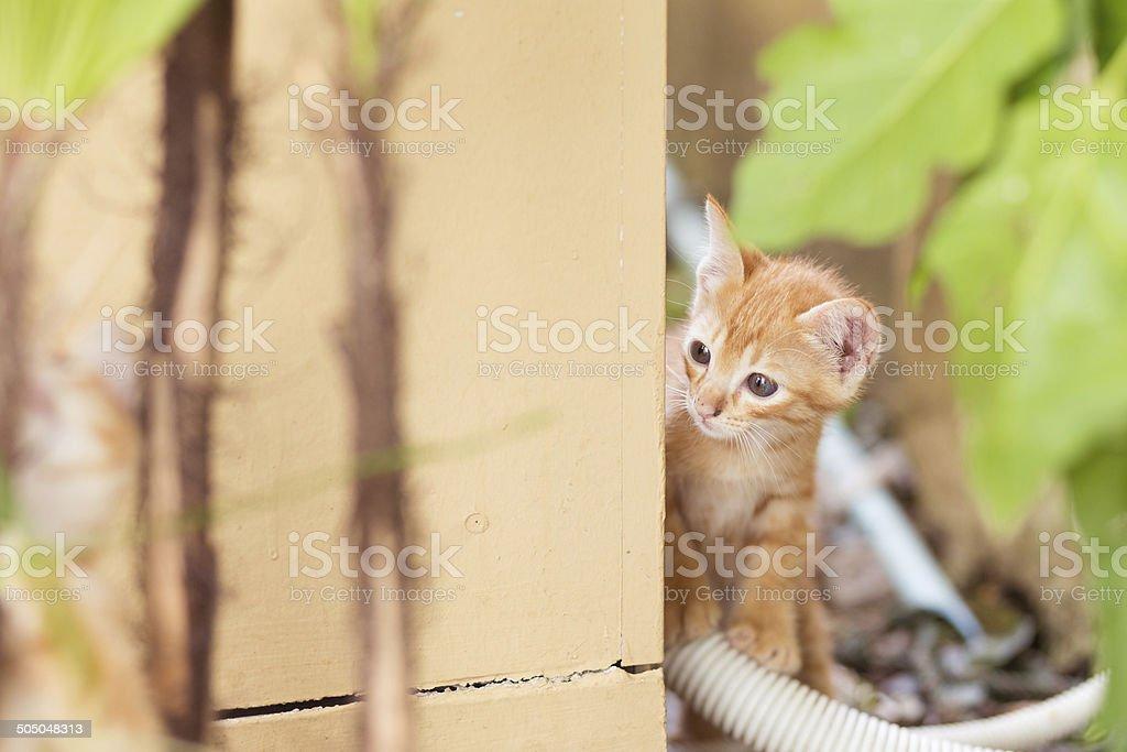 Süße neugierige Katze Treiben um die Ecke Lizenzfreies stock-foto