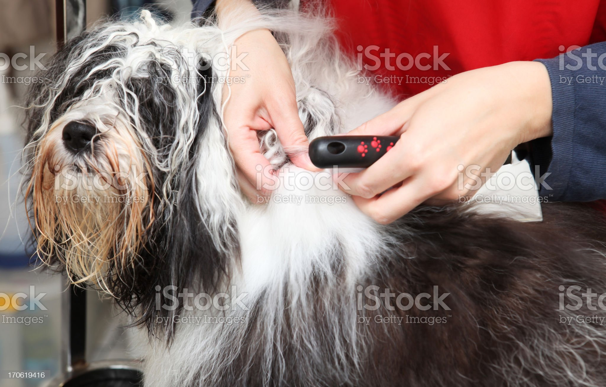 Cute dog at the groomer royalty-free stock photo