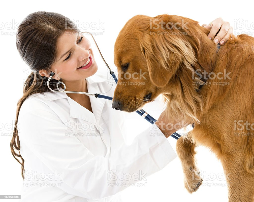 Cute dog at the vet royalty-free stock photo