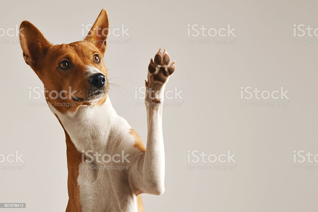 Cute dog giving his paw stock photo