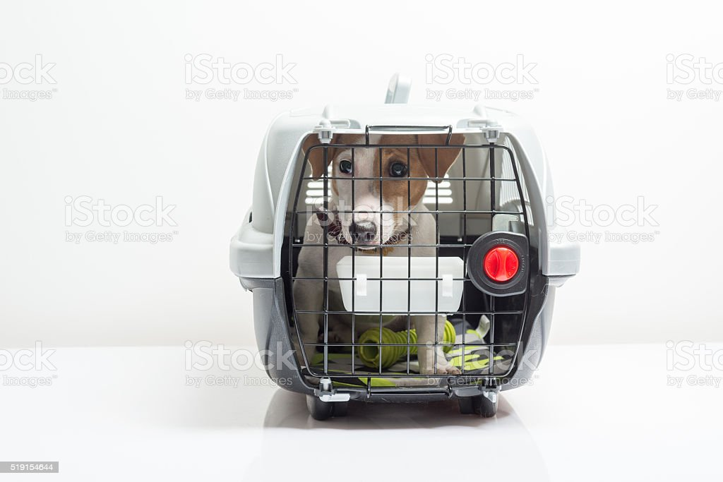 Cute dog in carrier stock photo