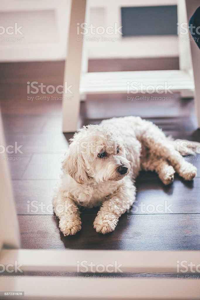 Cute dog in pet's friendly office stock photo