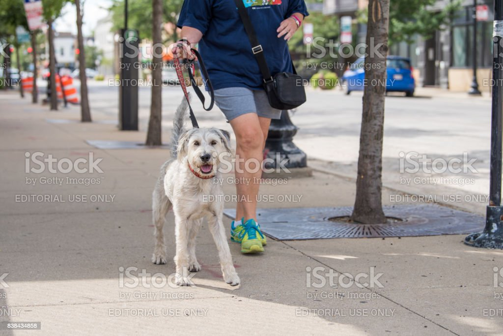 Cute dog in the North Center neighborhood stock photo