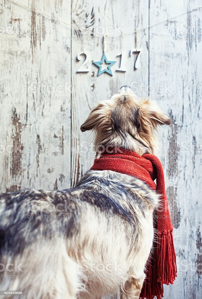 Cute dog lloking at 2017 sign stock photo