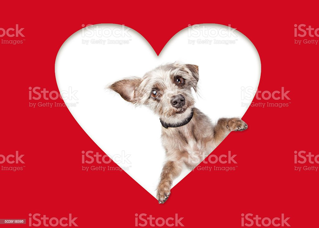 Cute Dog Looking Out of Cutout Heart stock photo