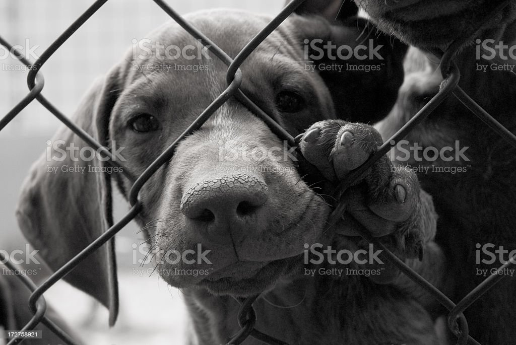 A cute dog needing to be saved behind a fence royalty-free stock photo