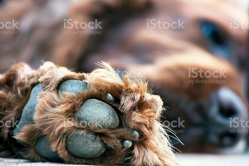 Cute dog paw stock photo