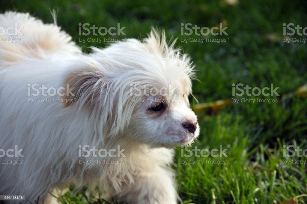 Cute dog stock photo