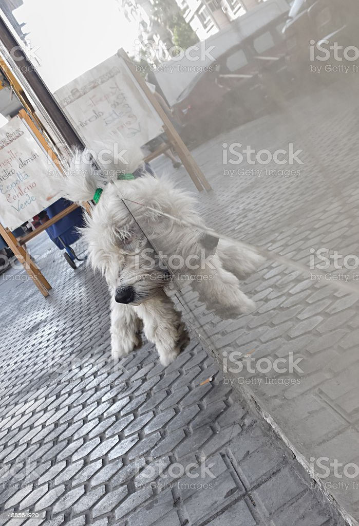 Lindo cachorro refletida na parede foto royalty-free