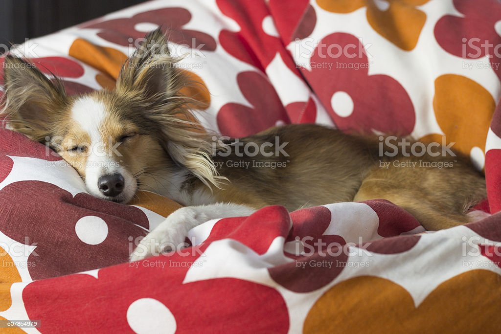 Cute dog relaxes in bean bag stock photo