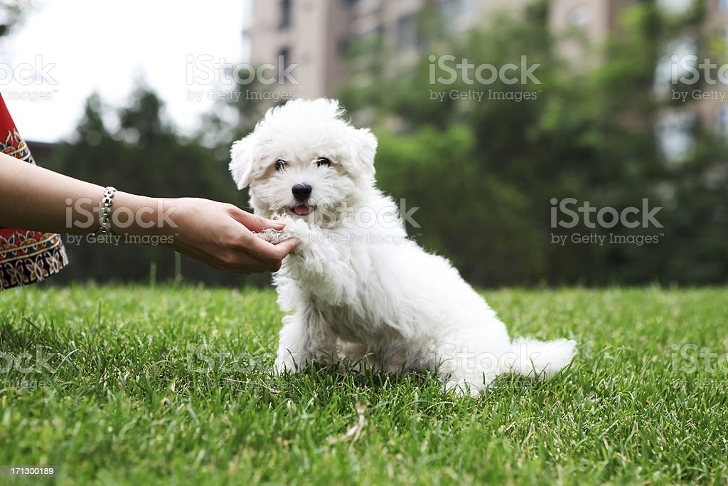 Cute Dog Shaking Hand - XLarge stock photo