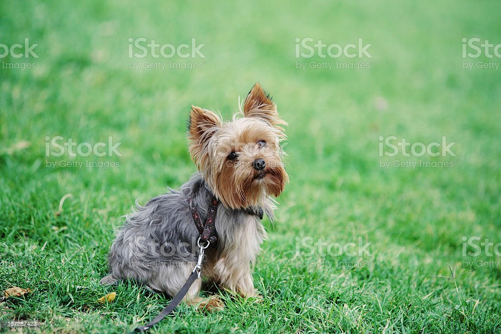 Cute dog sitting in grass stock photo