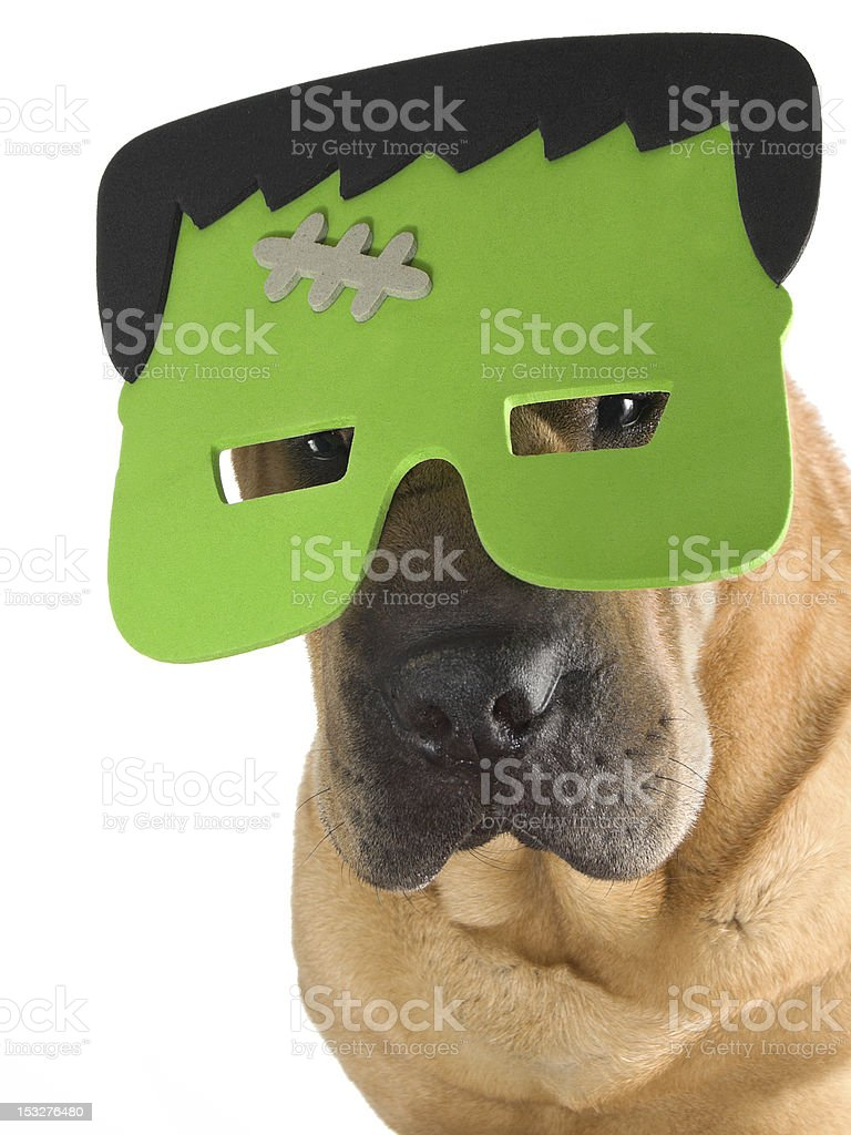 Cute Dog wearing Frankenstein Halloween Costume Mask stock photo