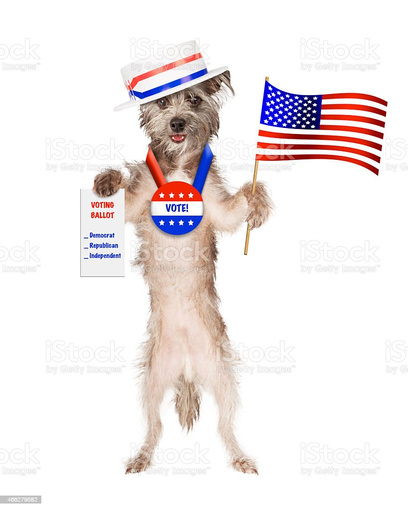 Cute dog wearing politician hat and vote button holding American stock photo