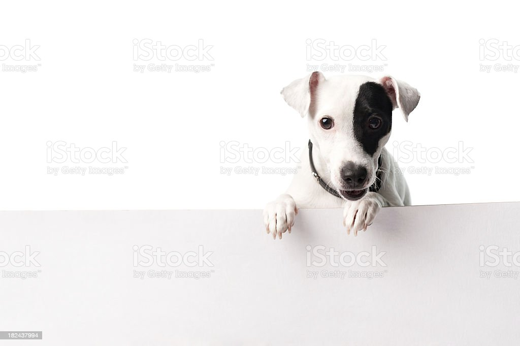 Cute dog with a banner stock photo