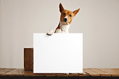 Cute dog with a large blank sign