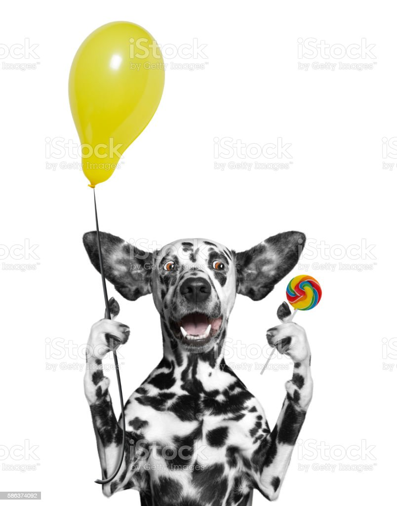 Cute dog with balloon and lollipop stock photo