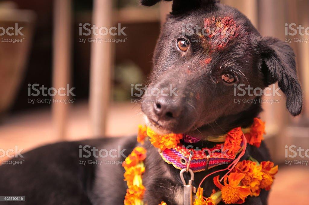 Cute dog with Tika, Nepal stock photo