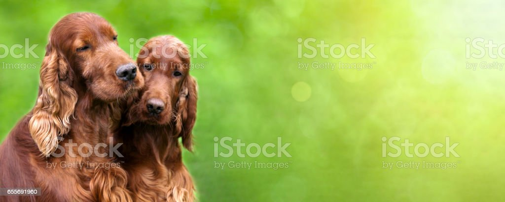Cute dogs banner stock photo
