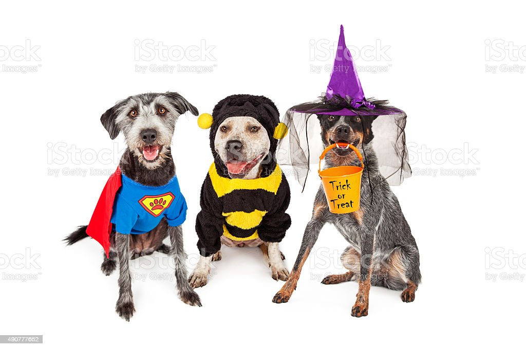 Cute Dogs Wearing Halloween Costumes stock photo