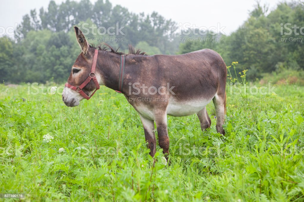 cute donkey on the meadow stock photo