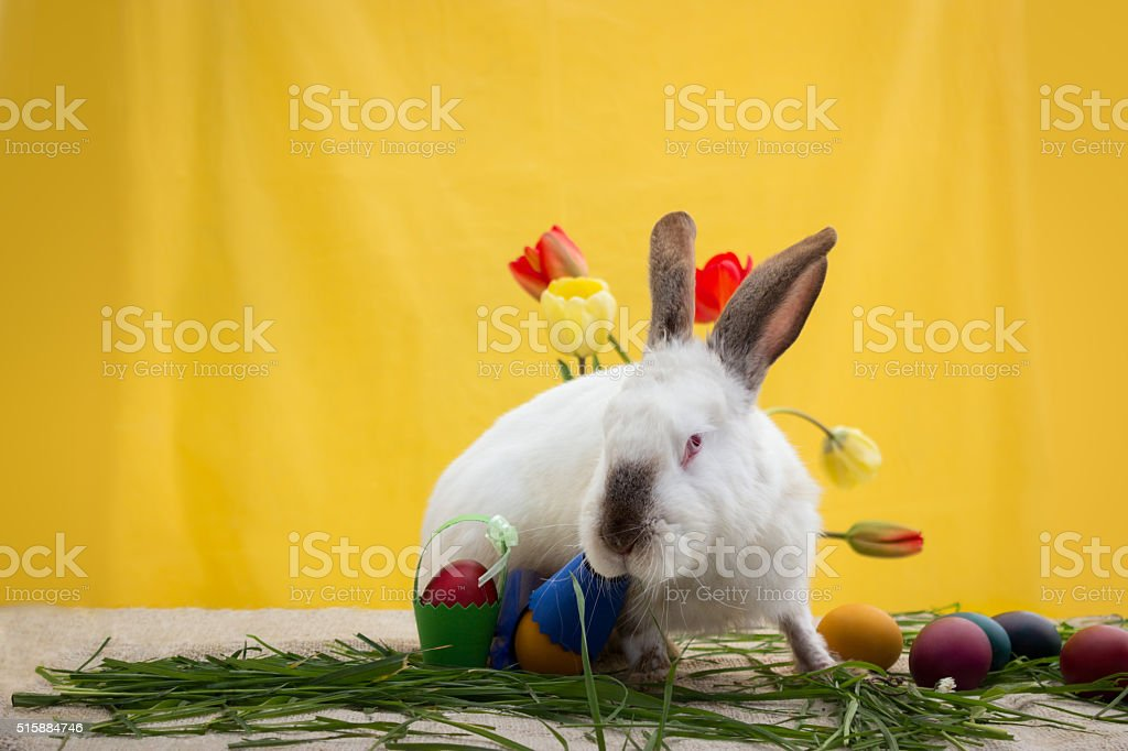 Cute Easter bunny with Easter decoration stock photo