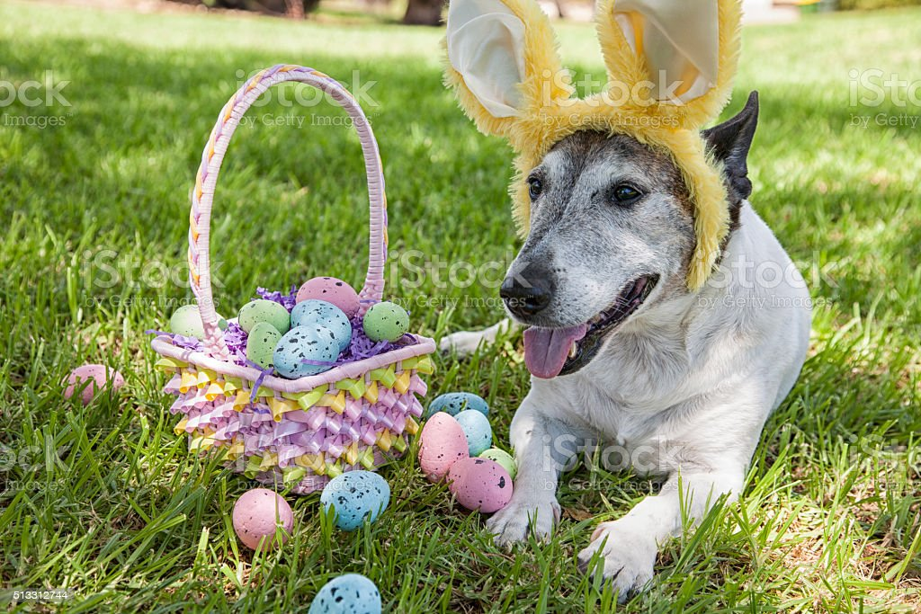 Cute Easter Dog stock photo