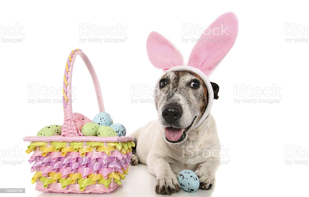 Cute Easter Doggy royalty-free stock photo