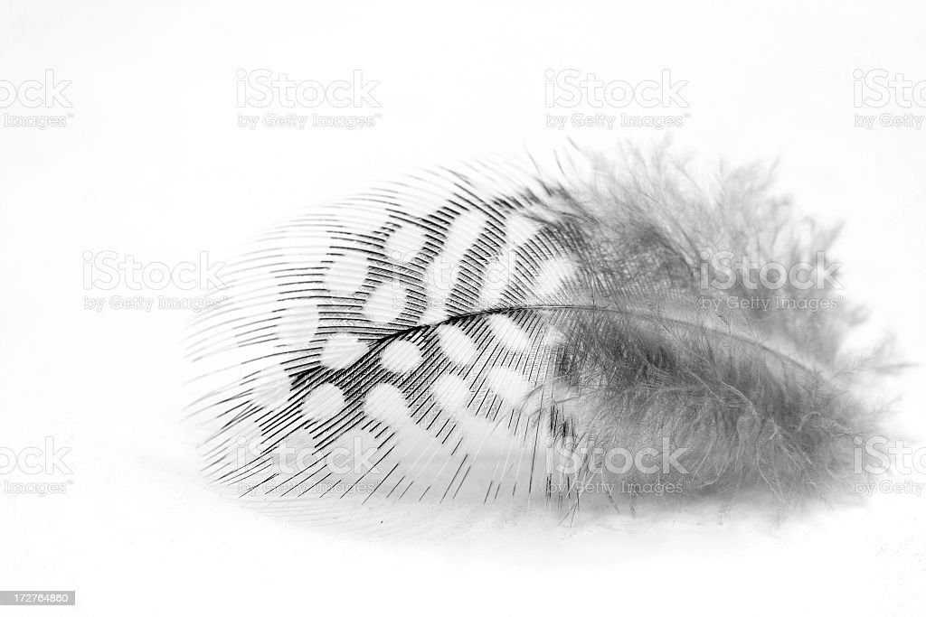 Cute Feather stock photo