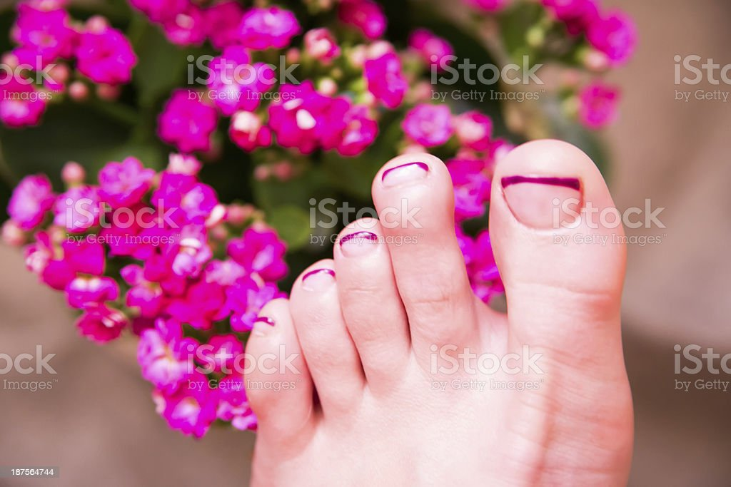 cute french manicure stock photo