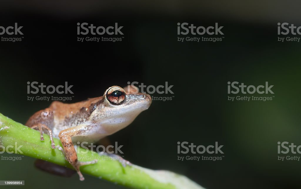 cute frog royalty-free stock photo