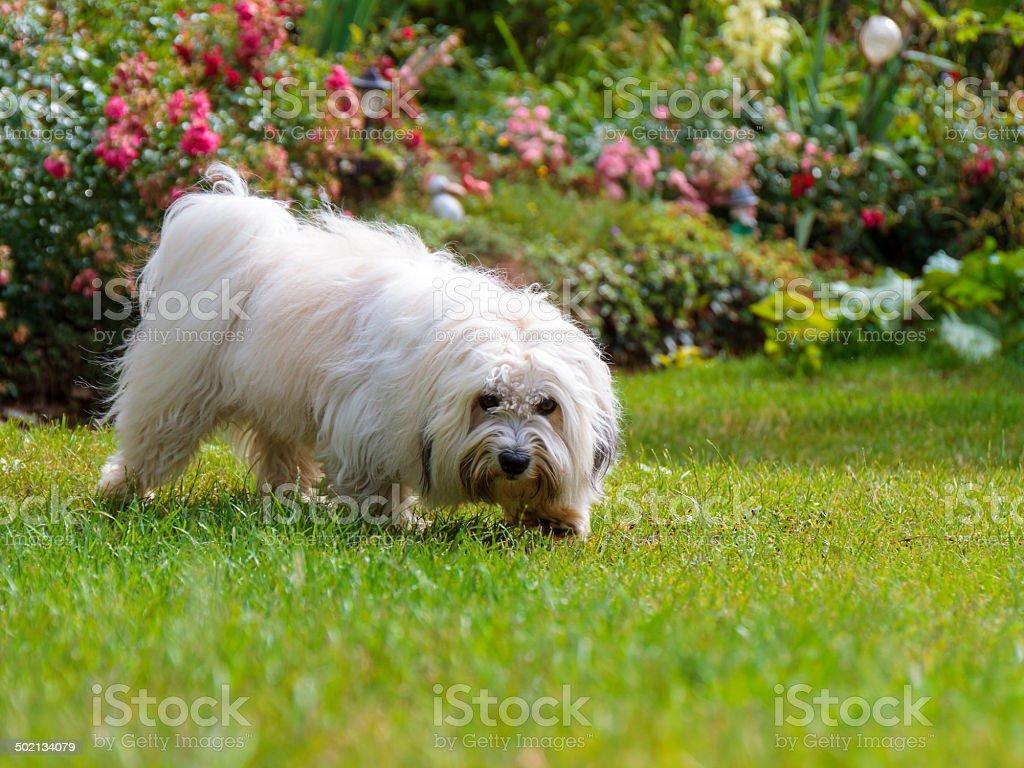 Süße lustige white Hund Lizenzfreies stock-foto