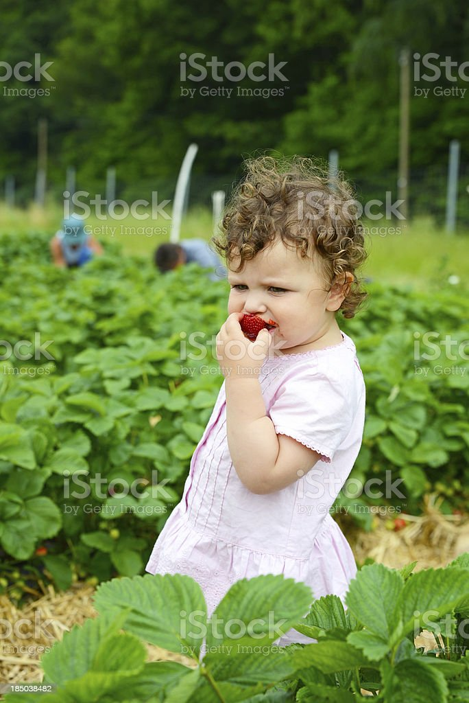 Cute girl eating Strawberry fruit, Child Tasting Healthy Food royalty-free stock photo