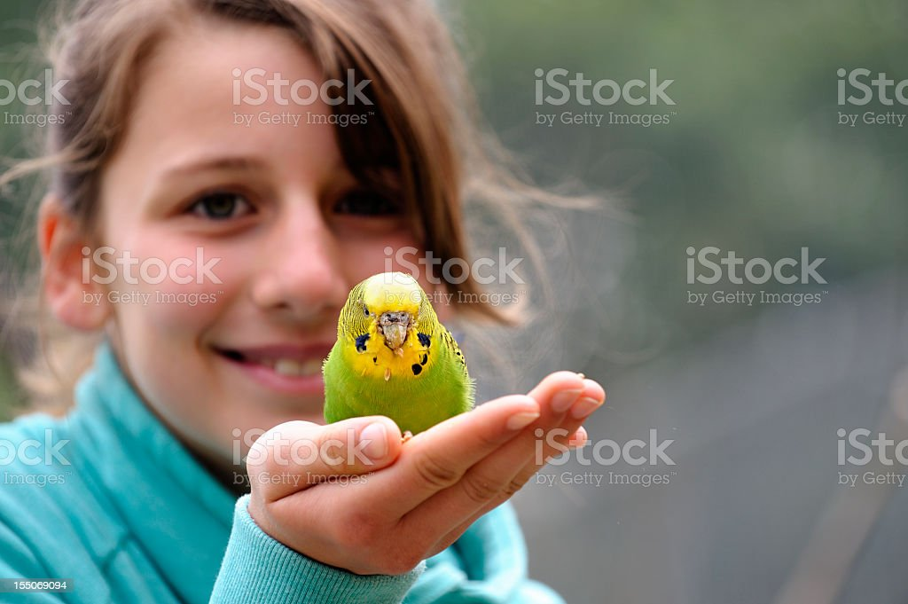 Cute Girl With A Budgie stock photo