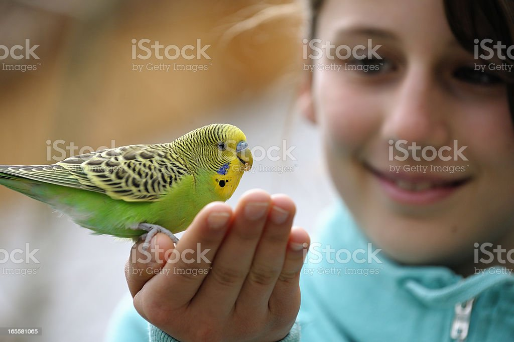 Cute Girl With A Budgie royalty-free stock photo