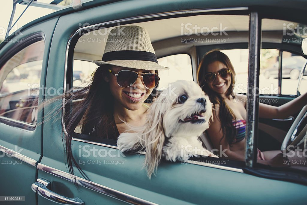 cute girls in vintage car with dog stock photo