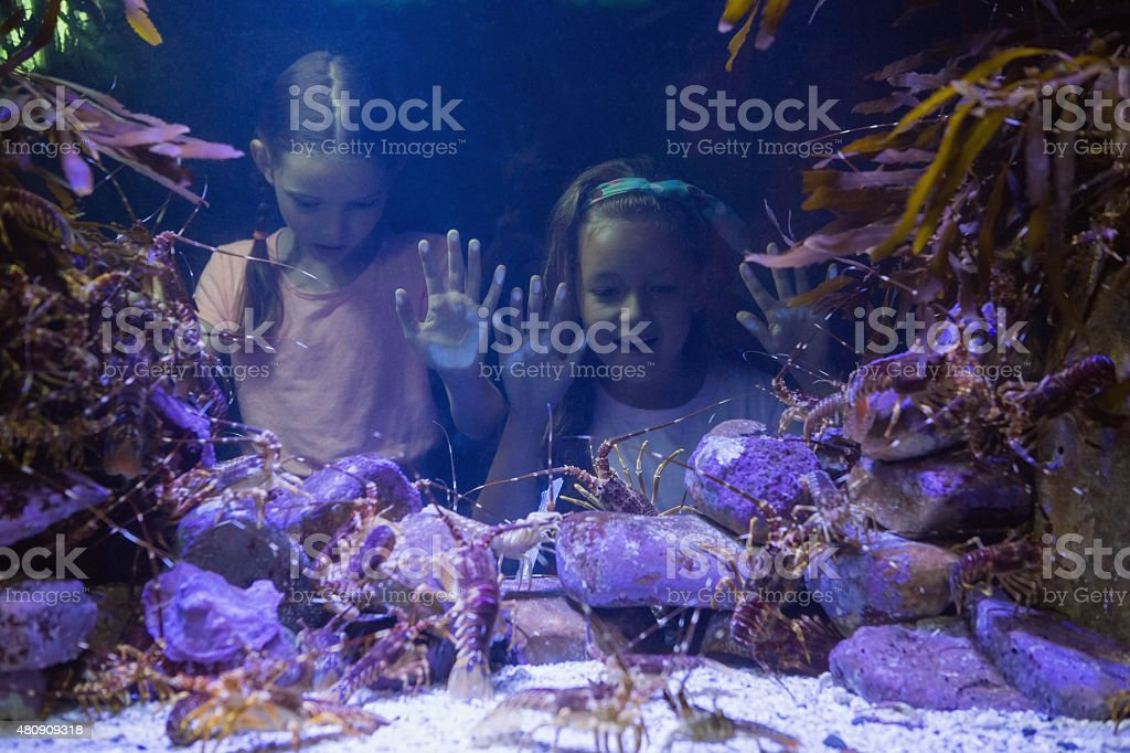 Cute girls looking at fish tank stock photo