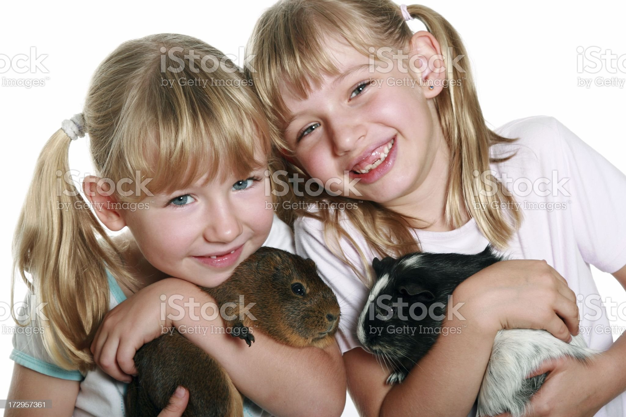 Cute Girls with Guinea Pigs on white background royalty-free stock photo