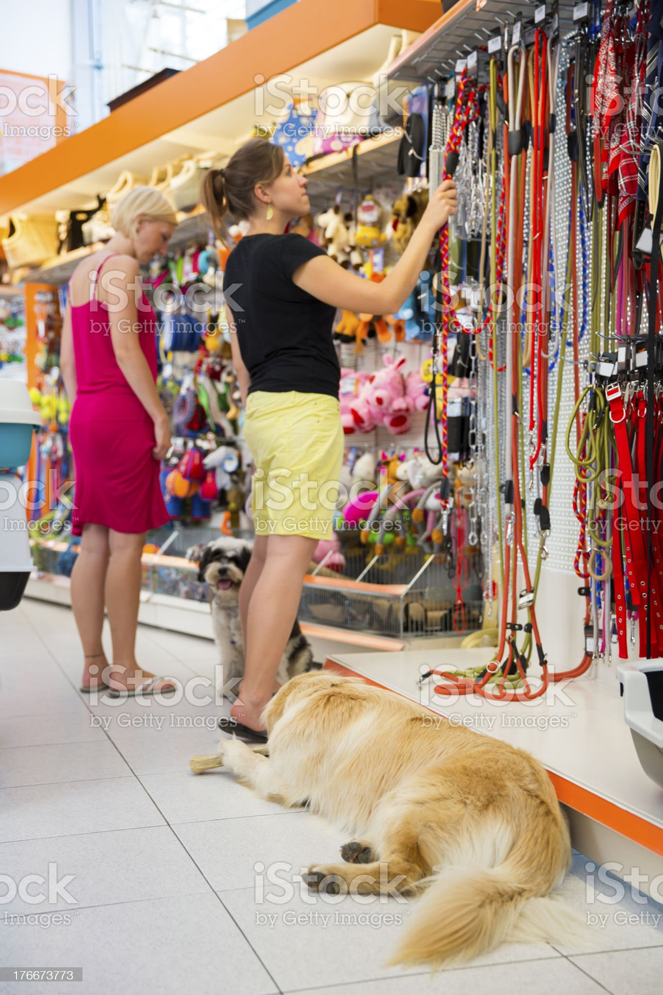 Cute Golden retriever and Tibetan Terrier in pet store royalty-free stock photo