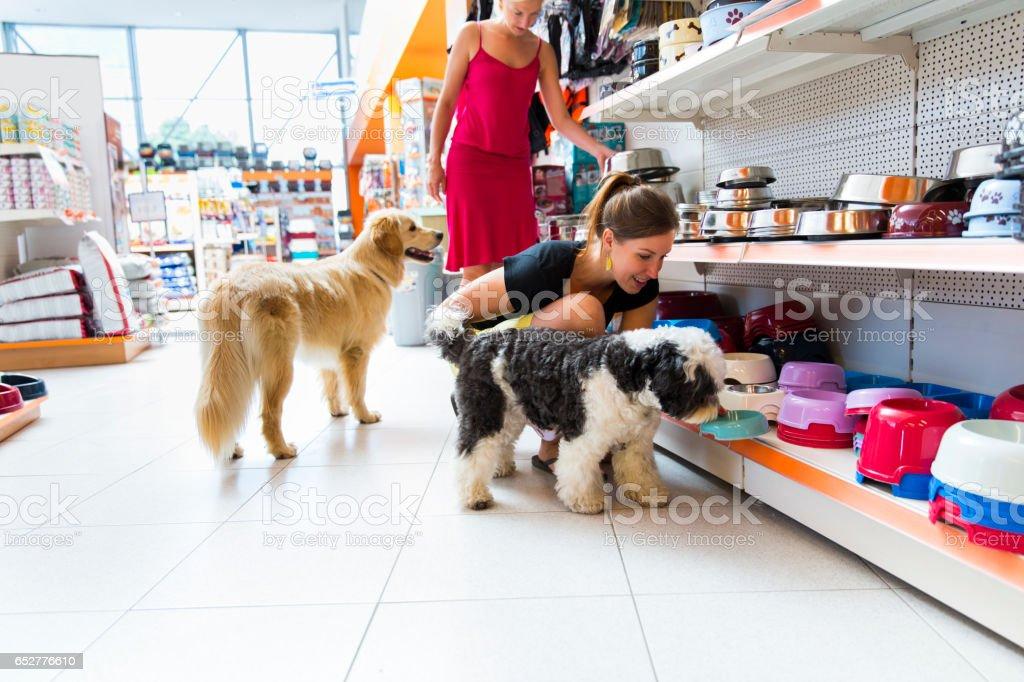 Cute Golden retriever and Tibetan Terrier in pet store stock photo