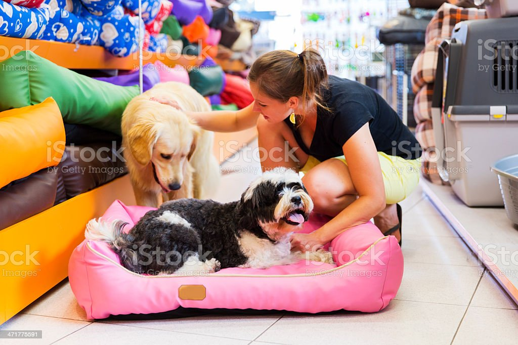 Cute Golden retriever and Tibetan Terrier in pet store resting royalty-free stock photo