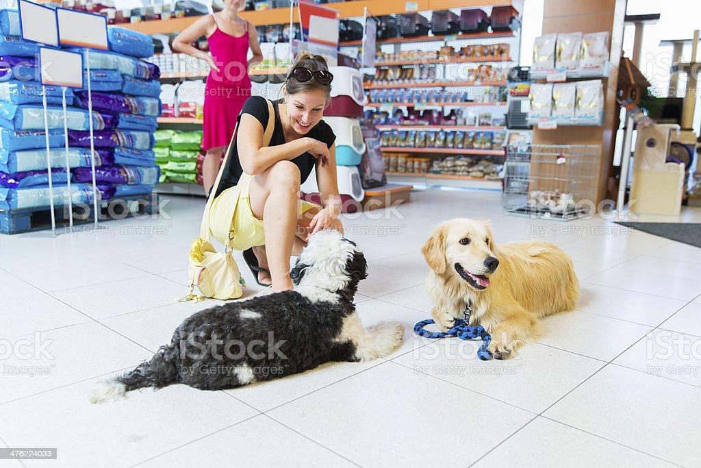 Cute Golden retriever and Tibetan Terrier in pet store resting stock photo