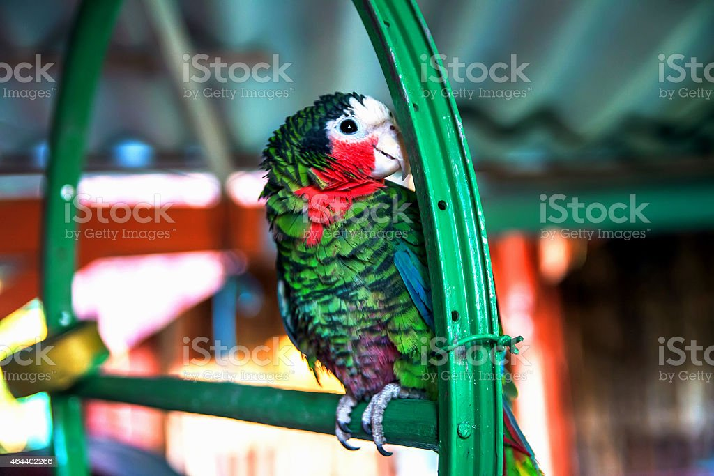 Cute green parrot stock photo