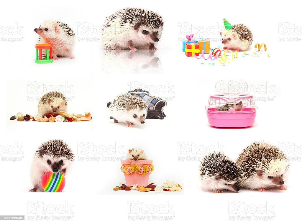 cute hedgehog baby background stock photo