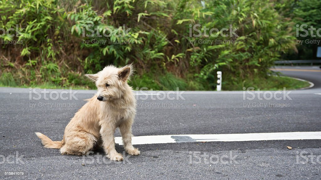 Cute homeless stray dog stock photo