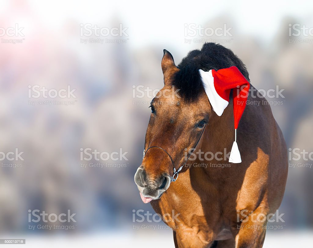 cute horse in santa hat showing tongue stock photo