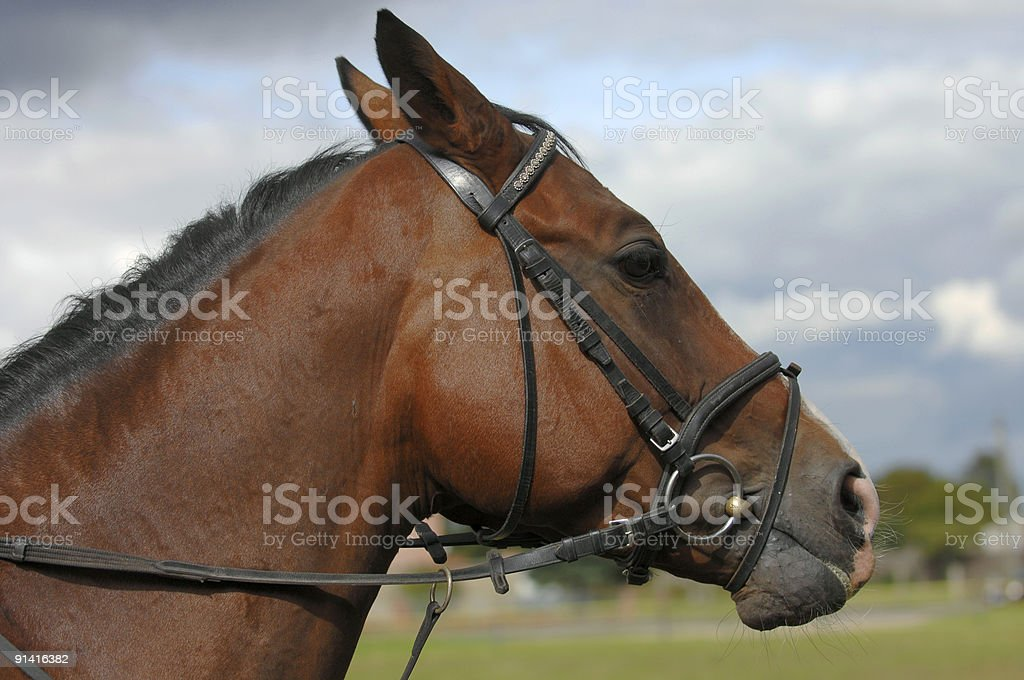 cute horse stock photo