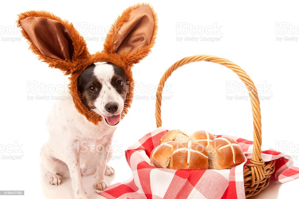 Cute Hot Cross Bun Dog stock photo