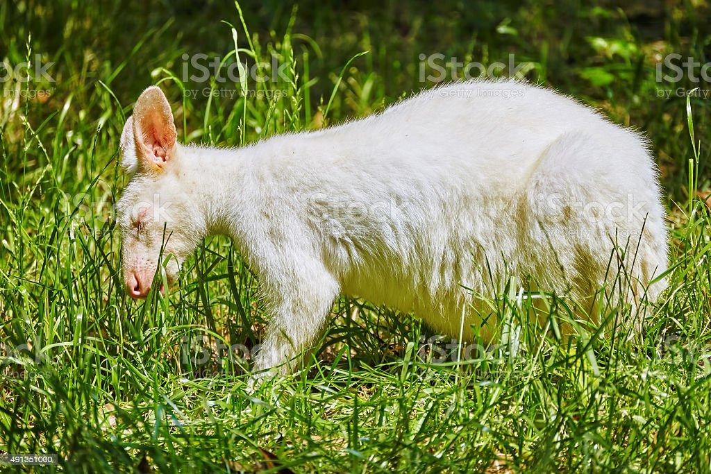 Cute Kangaroo. stock photo